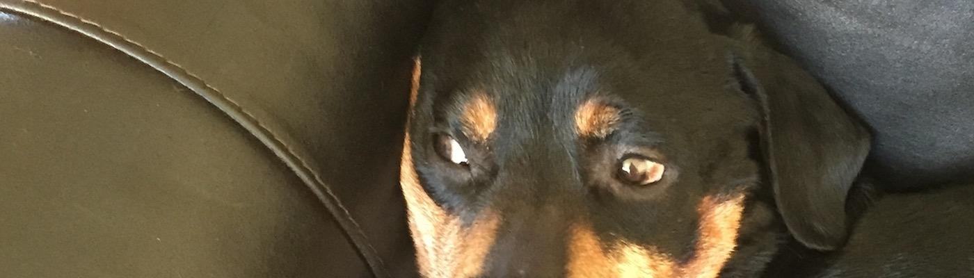 Dog Hates Film