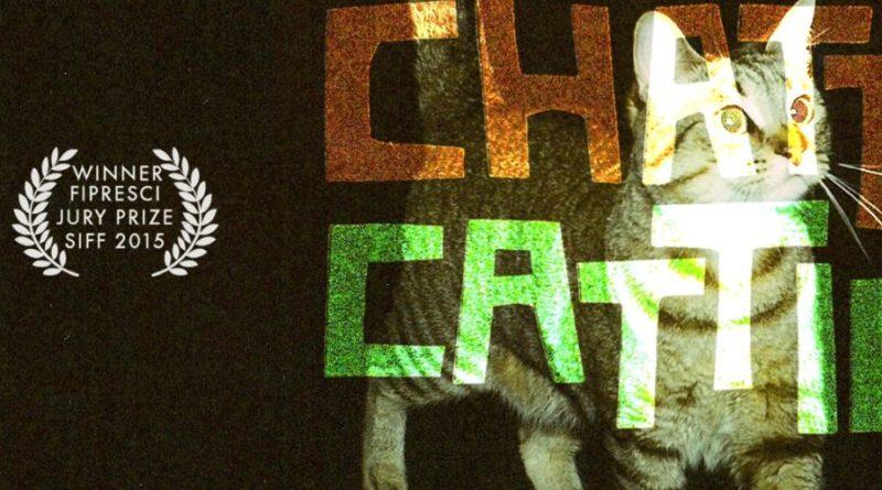 chattycattiesbanner-1500x500